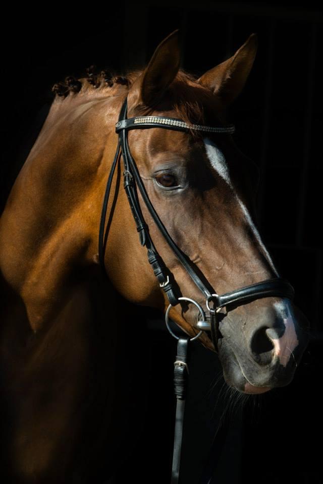 Wie man Sex mit Pferden hat